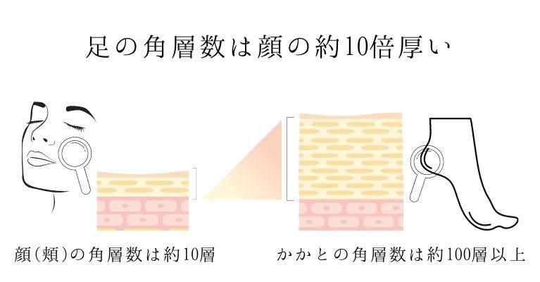 顔の角層数とかかとの角層数の違い