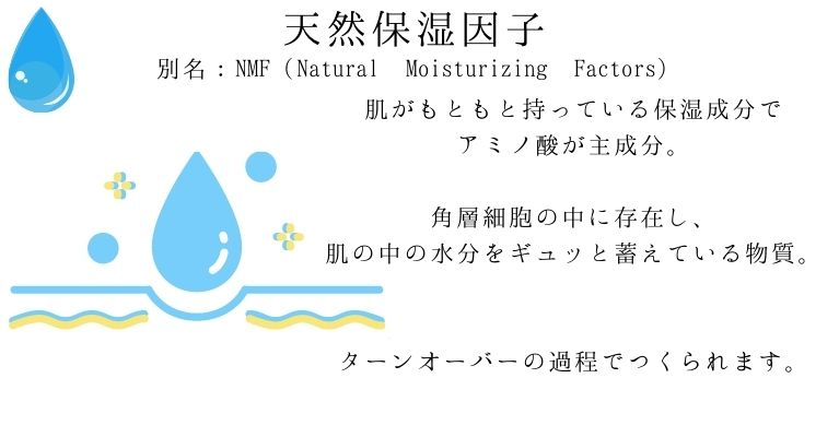 天然保湿因子の特徴