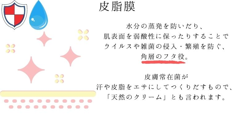 皮脂膜の特徴